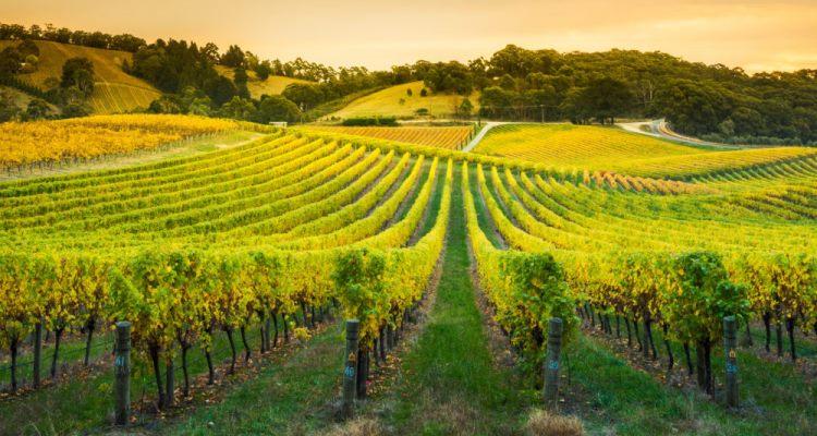 Beyond Vines Barossa Valley